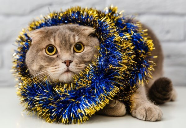 cat caught in tinsel