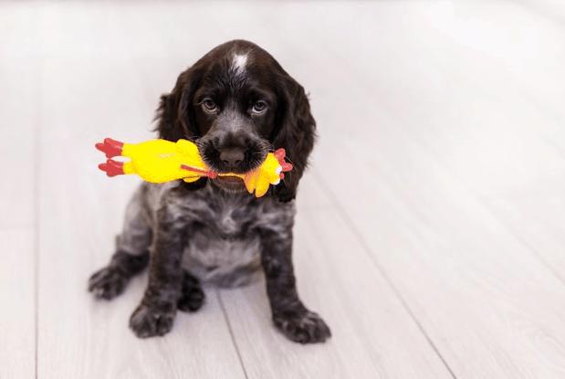 dog-holding-chicken-toy