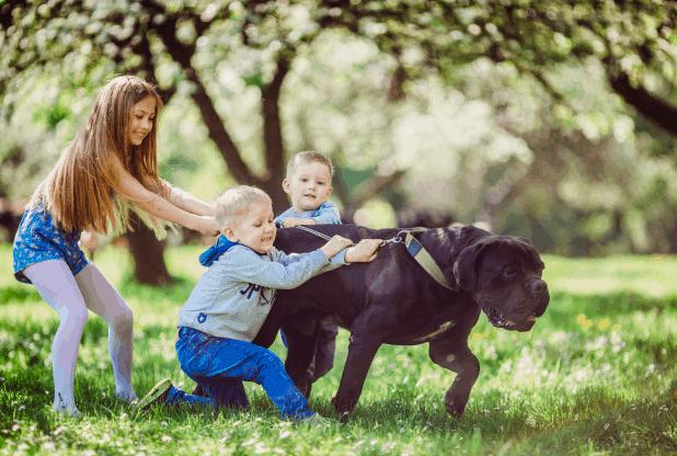 kids-holding-large-breed-dog